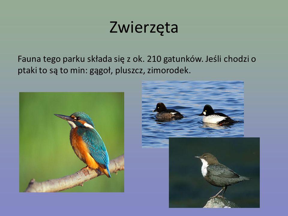 Zwierzęta Fauna tego parku składa się z ok. 210 gatunków.