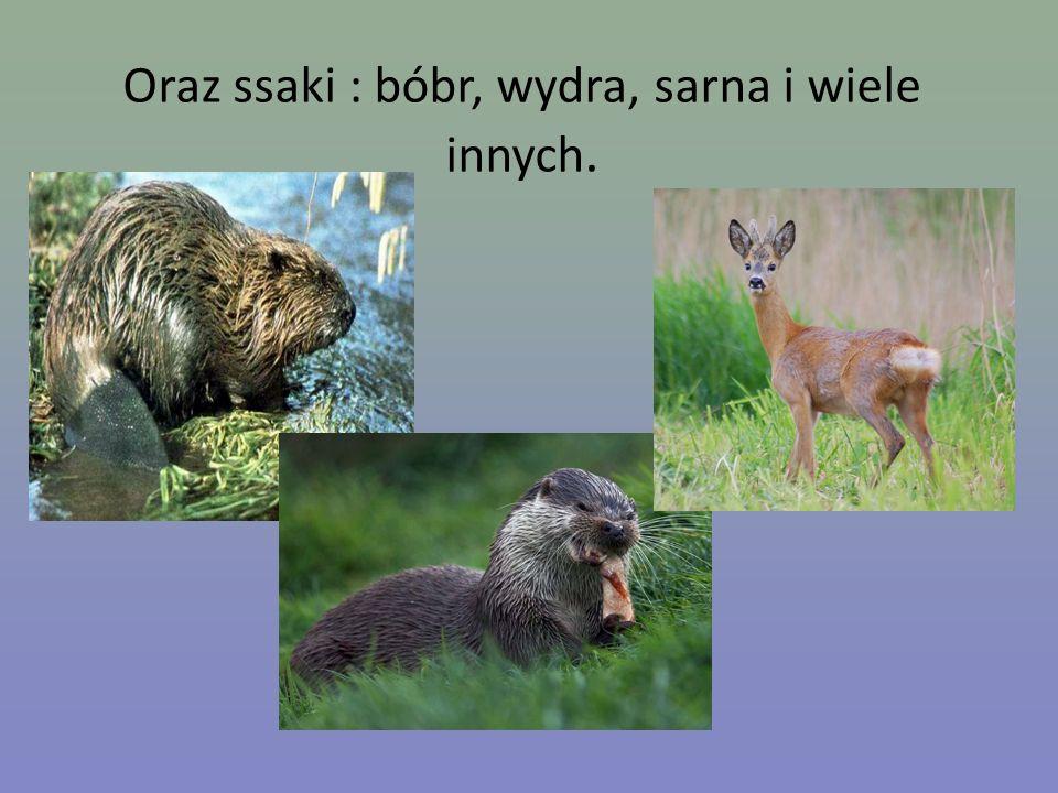 Oraz ssaki : bóbr, wydra, sarna i wiele innych.