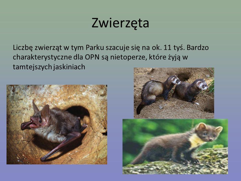 ZwierzętaLiczbę zwierząt w tym Parku szacuje się na ok.