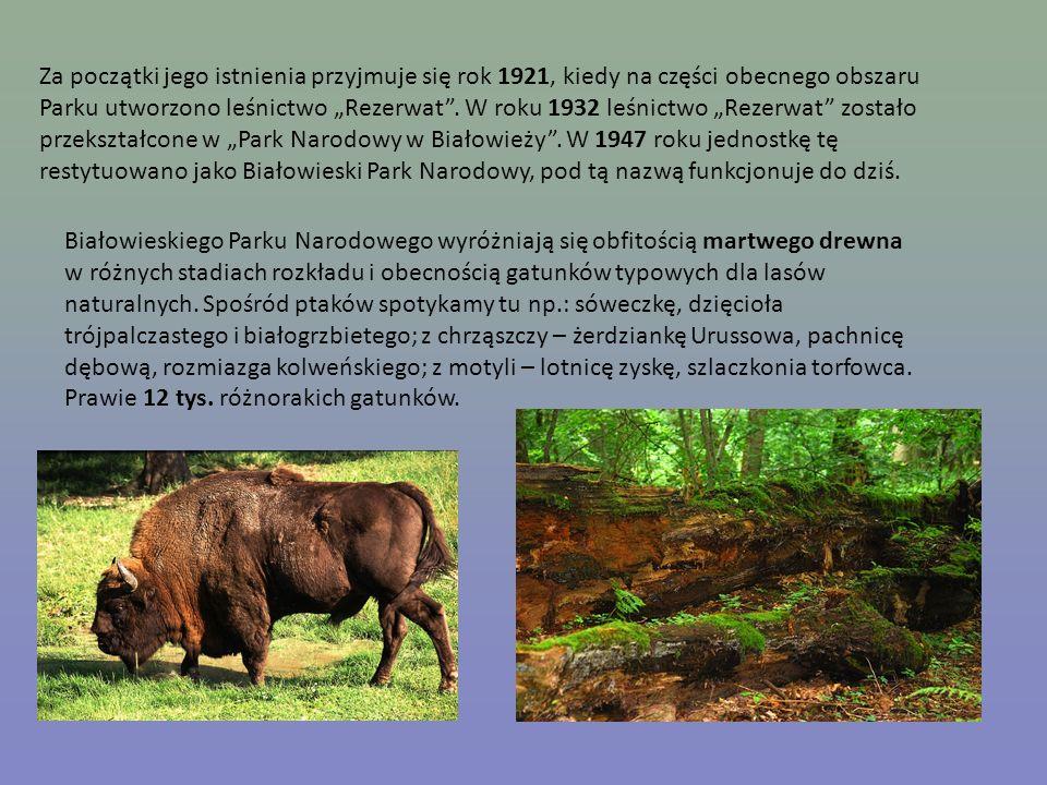 """Za początki jego istnienia przyjmuje się rok 1921, kiedy na części obecnego obszaru Parku utworzono leśnictwo """"Rezerwat . W roku 1932 leśnictwo """"Rezerwat zostało przekształcone w """"Park Narodowy w Białowieży . W 1947 roku jednostkę tę restytuowano jako Białowieski Park Narodowy, pod tą nazwą funkcjonuje do dziś."""