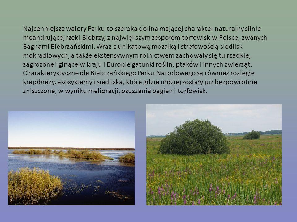 Najcenniejsze walory Parku to szeroka dolina mającej charakter naturalny silnie meandrującej rzeki Biebrzy, z największym zespołem torfowisk w Polsce, zwanych Bagnami Biebrzańskimi.