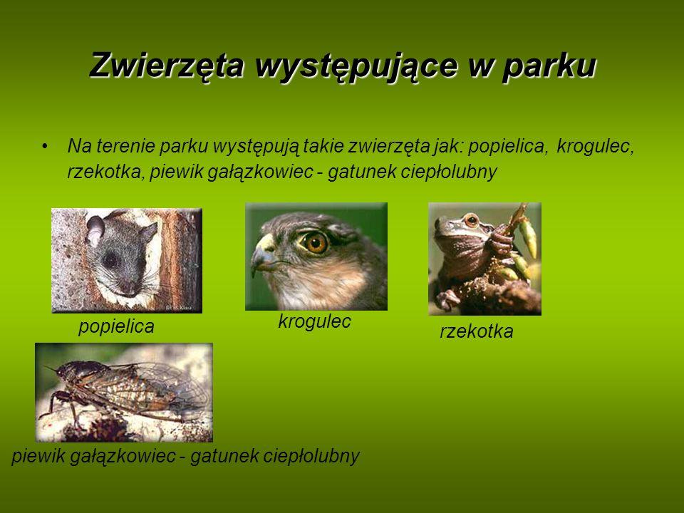 Zwierzęta występujące w parku