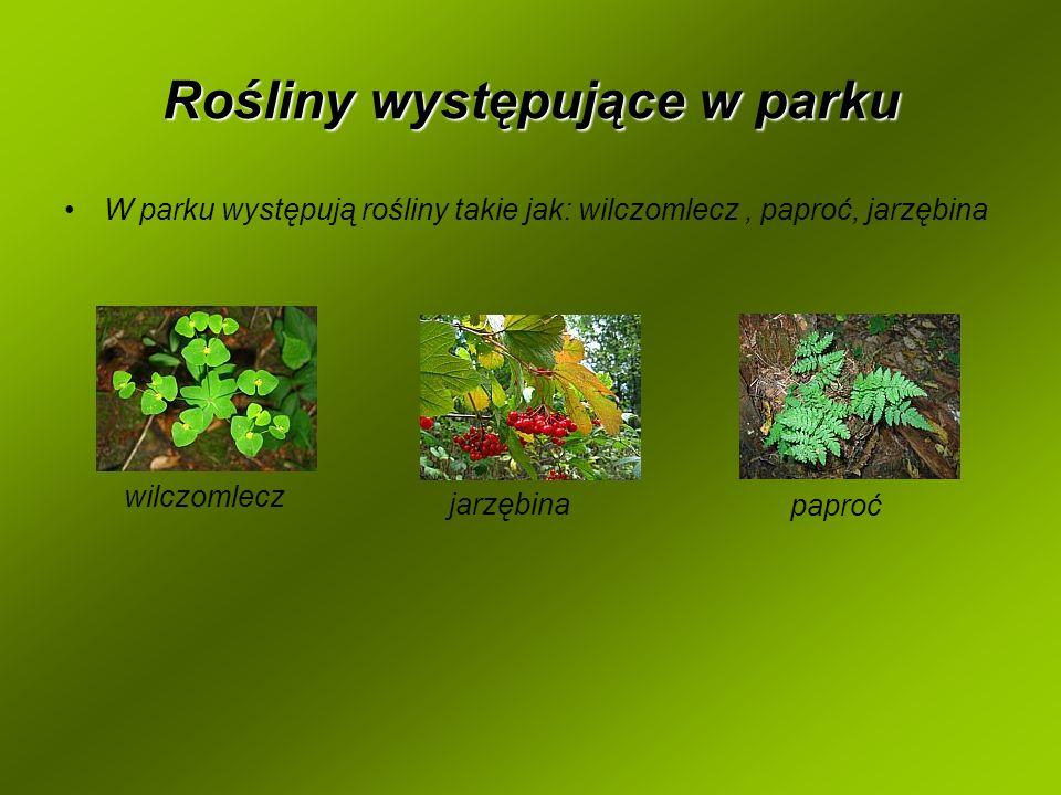 Rośliny występujące w parku