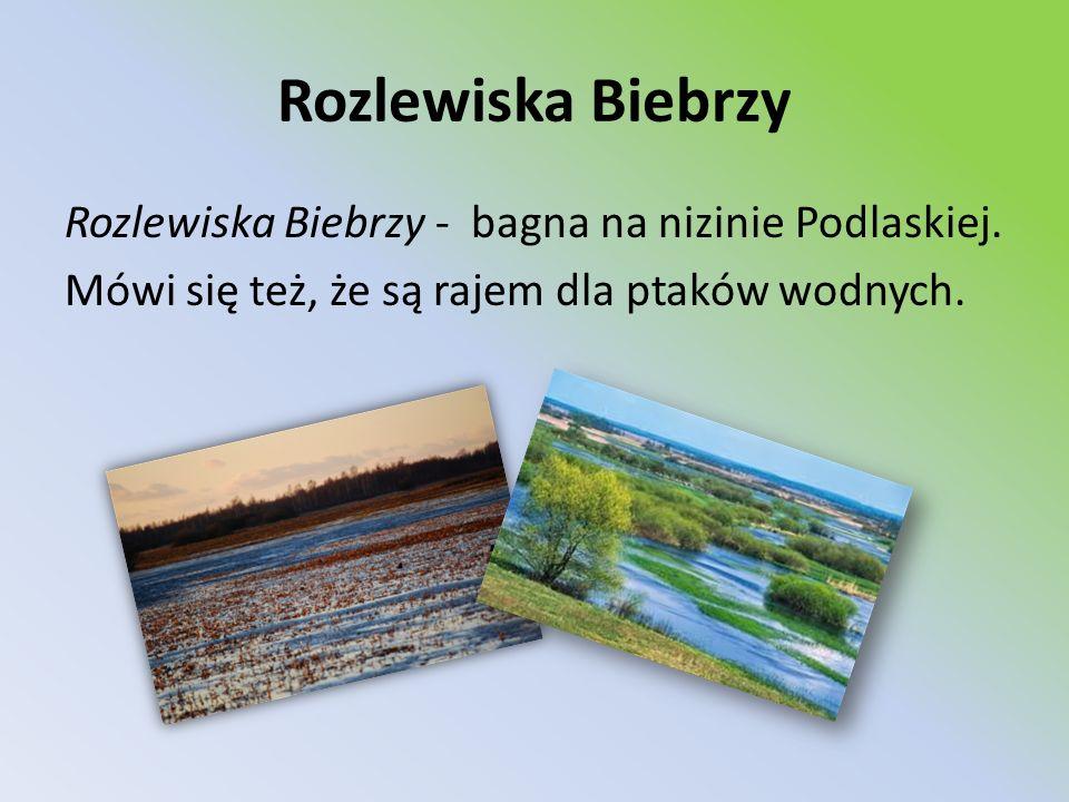 Rozlewiska Biebrzy Rozlewiska Biebrzy - bagna na nizinie Podlaskiej.
