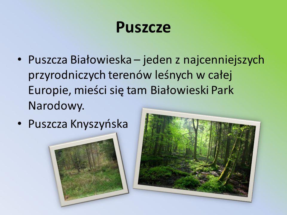 Puszcze Puszcza Białowieska – jeden z najcenniejszych przyrodniczych terenów leśnych w całej Europie, mieści się tam Białowieski Park Narodowy.