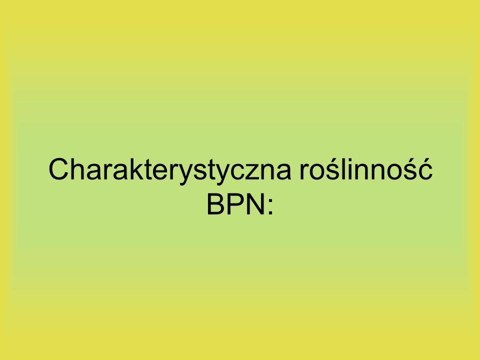 Charakterystyczna roślinność BPN: