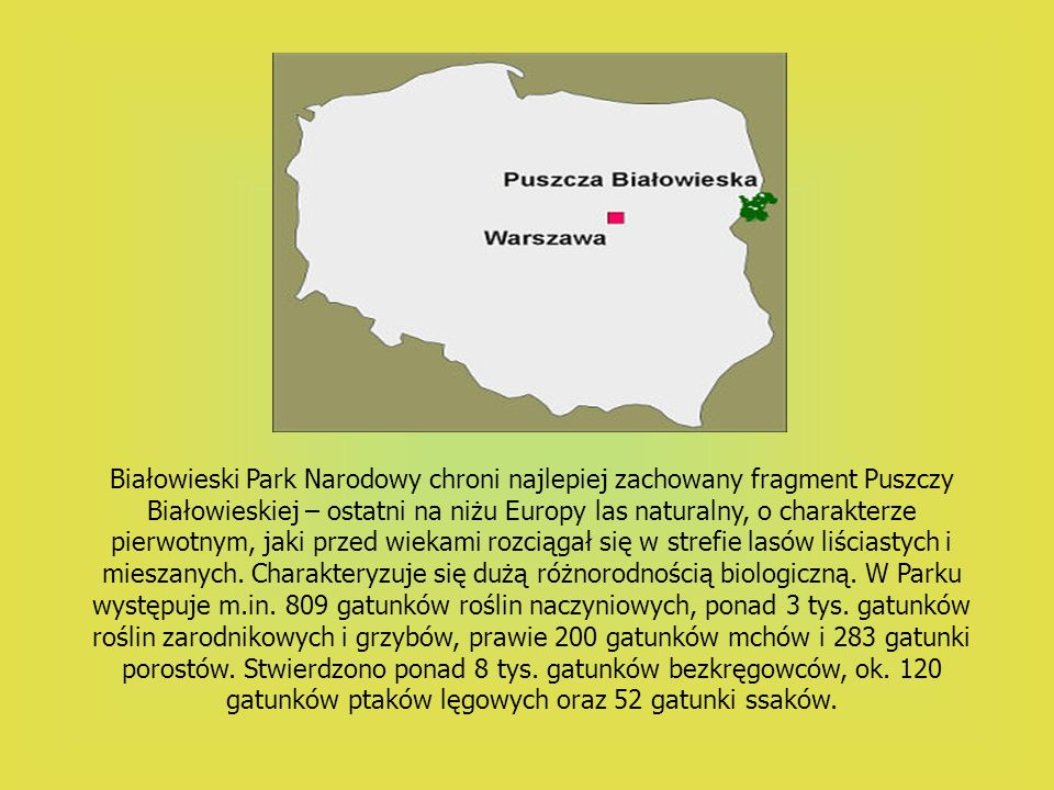 Białowieski Park Narodowy chroni najlepiej zachowany fragment Puszczy Białowieskiej – ostatni na niżu Europy las naturalny, o charakterze pierwotnym, jaki przed wiekami rozciągał się w strefie lasów liściastych i mieszanych.