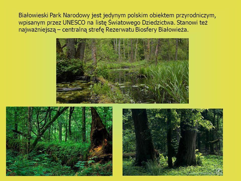 Białowieski Park Narodowy jest jedynym polskim obiektem przyrodniczym, wpisanym przez UNESCO na listę Światowego Dziedzictwa.