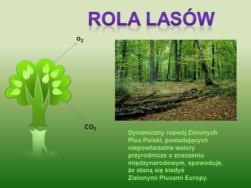 Rola lasów o2. CO2.