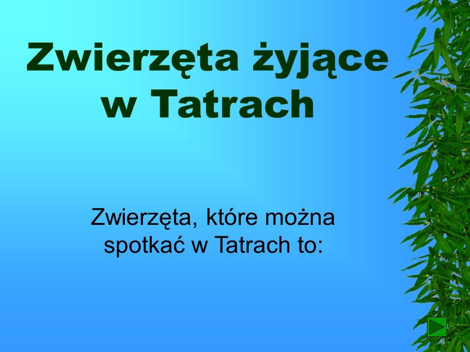 Zwierzęta żyjące w Tatrach