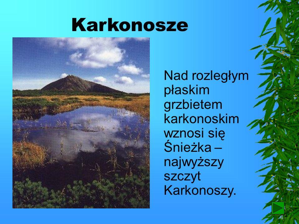 Karkonosze Nad rozległym płaskim grzbietem karkonoskim wznosi się Śnieżka – najwyższy szczyt Karkonoszy.