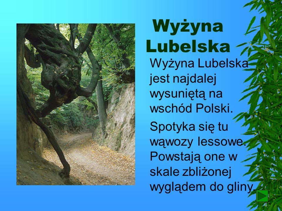 Wyżyna Lubelska Wyżyna Lubelska jest najdalej wysuniętą na wschód Polski.