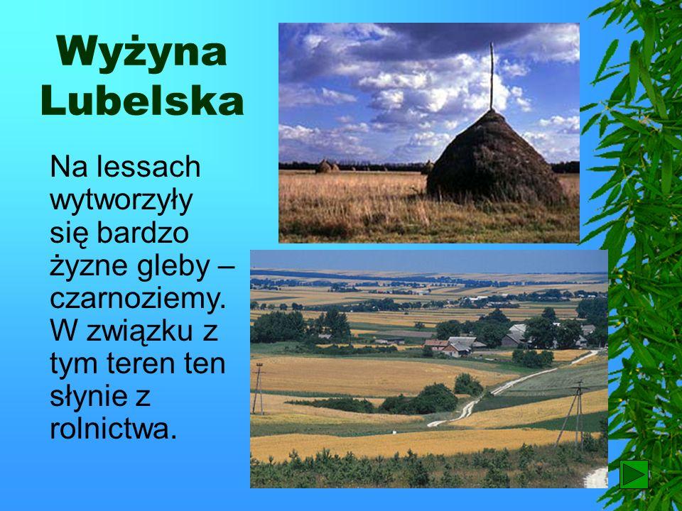 Wyżyna LubelskaNa lessach wytworzyły się bardzo żyzne gleby – czarnoziemy. W związku z tym teren ten słynie z rolnictwa.