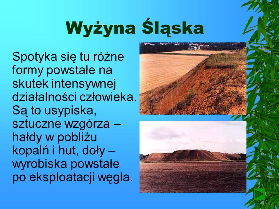 Wyżyna Śląska