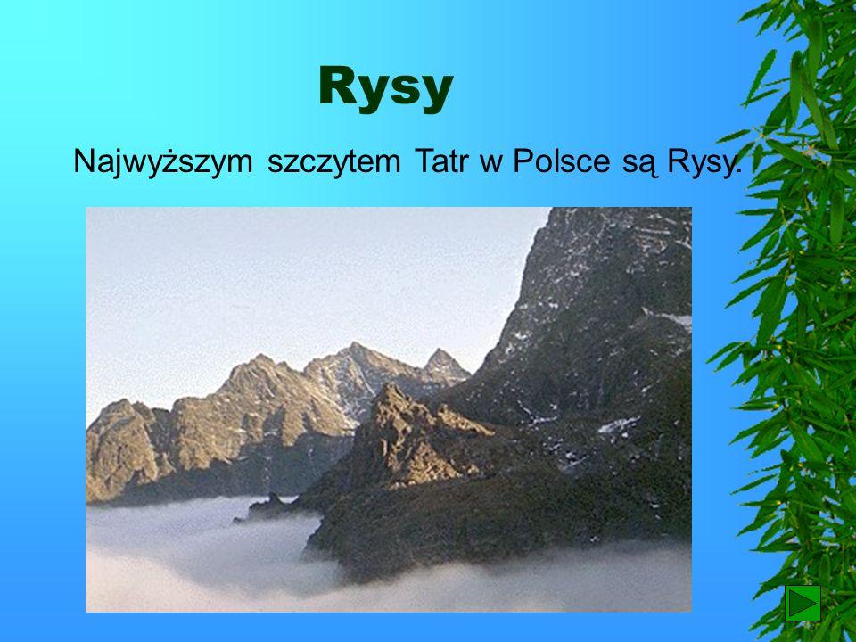 Rysy Najwyższym szczytem Tatr w Polsce są Rysy. 5