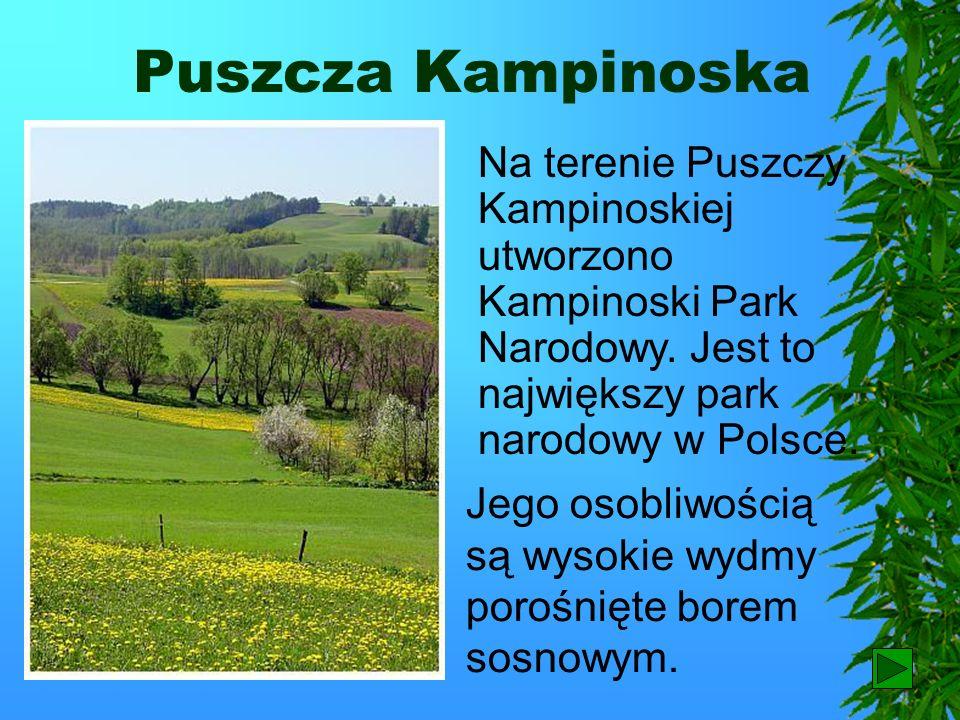 Puszcza Kampinoska Na terenie Puszczy Kampinoskiej utworzono Kampinoski Park Narodowy. Jest to największy park narodowy w Polsce.