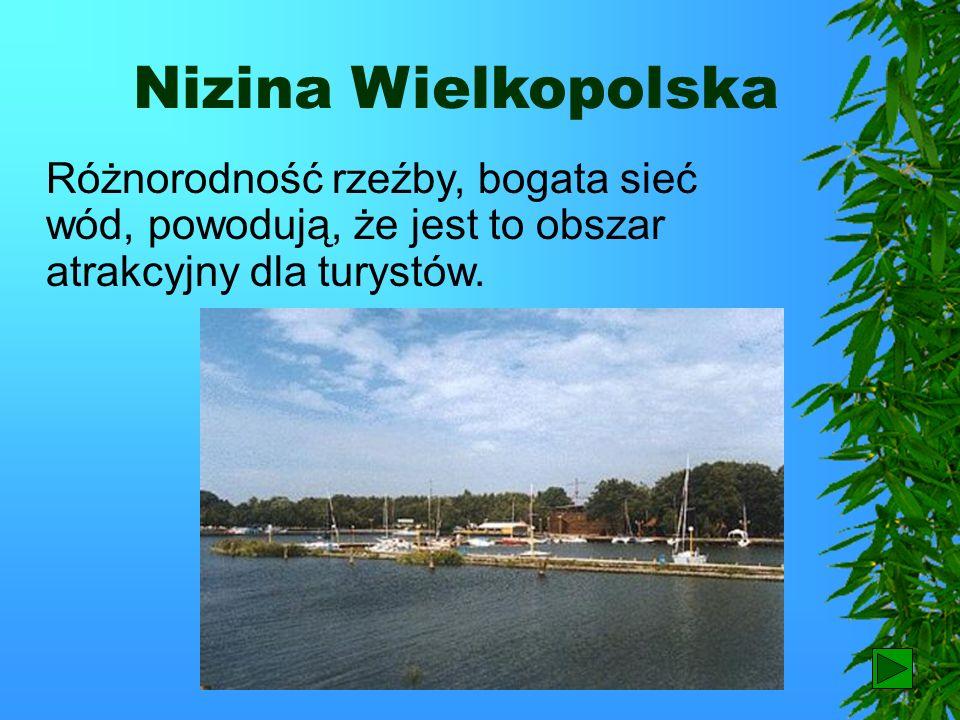 Nizina Wielkopolska Różnorodność rzeźby, bogata sieć wód, powodują, że jest to obszar atrakcyjny dla turystów.