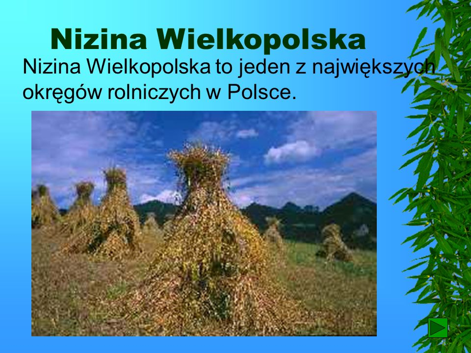 Nizina Wielkopolska Nizina Wielkopolska to jeden z największych okręgów rolniczych w Polsce. 61