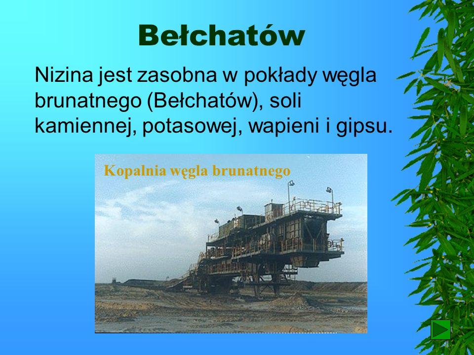 BełchatówNizina jest zasobna w pokłady węgla brunatnego (Bełchatów), soli kamiennej, potasowej, wapieni i gipsu.