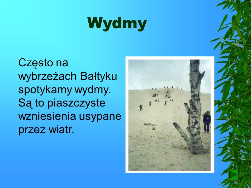 WydmyCzęsto na wybrzeżach Bałtyku spotykamy wydmy. Są to piaszczyste wzniesienia usypane przez wiatr.