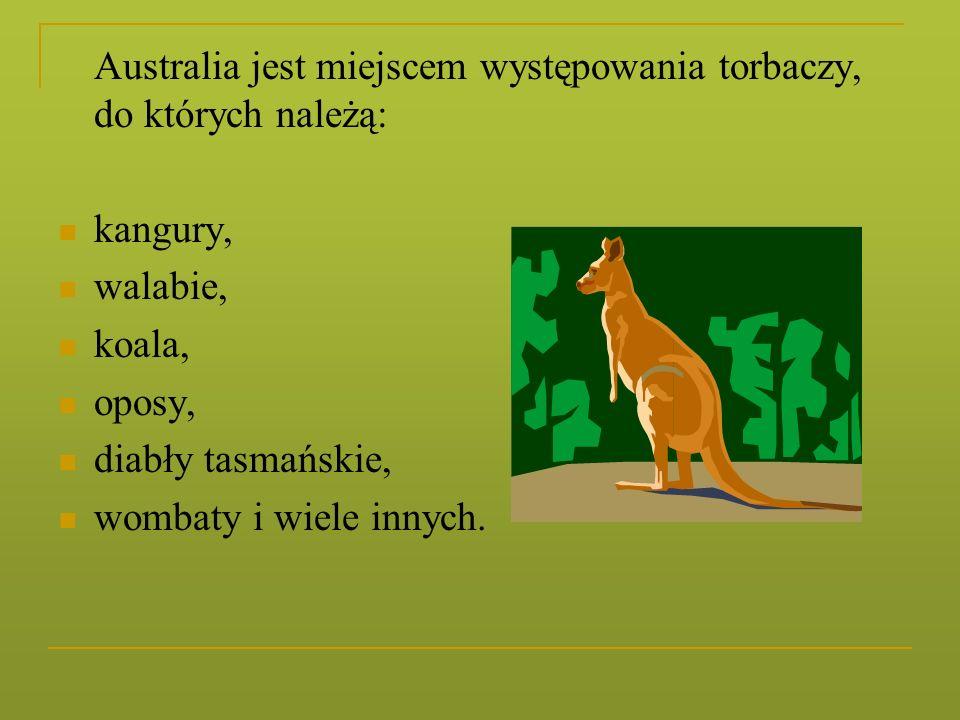 Australia jest miejscem występowania torbaczy, do których należą: