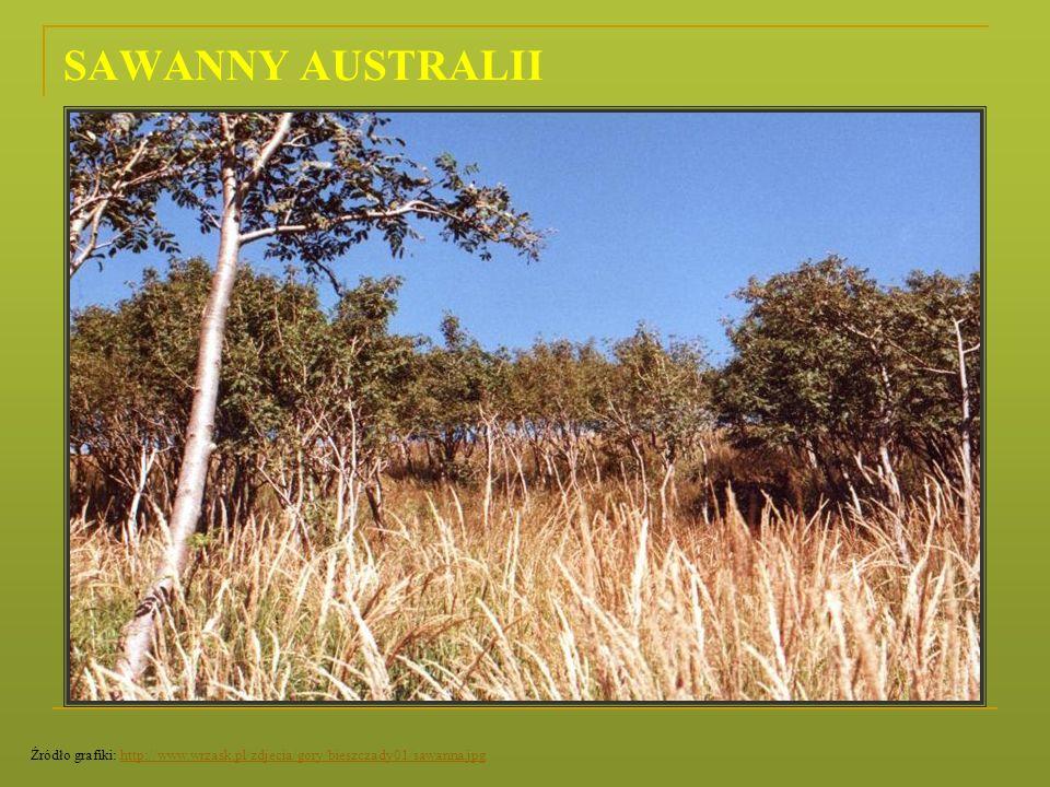 SAWANNY AUSTRALII Źródło grafiki: http://www.wrzask.pl/zdjecia/gory/bieszczady01/sawanna.jpg