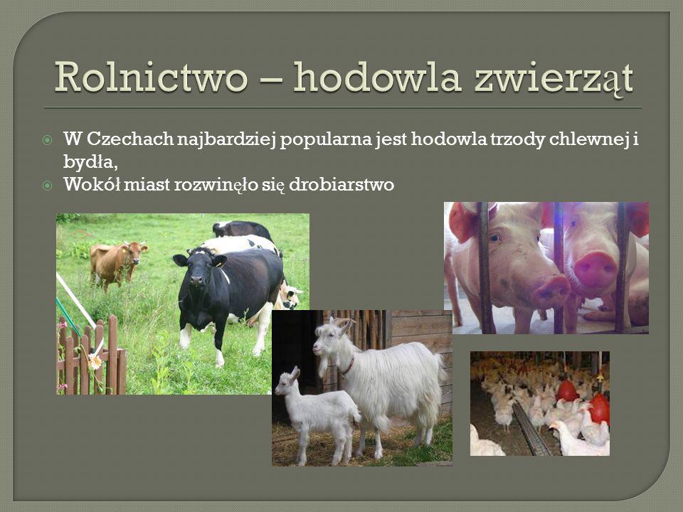 Rolnictwo – hodowla zwierząt
