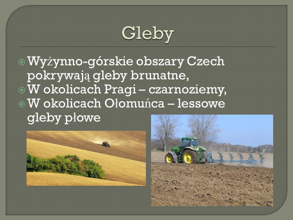 Gleby Wyżynno-górskie obszary Czech pokrywają gleby brunatne,