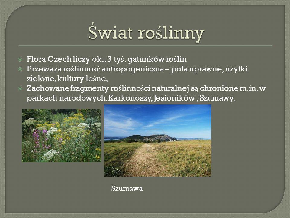 Świat roślinny Flora Czech liczy ok.. 3 tyś. gatunków roślin