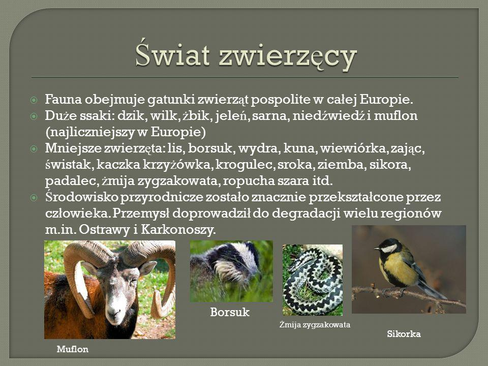 Świat zwierzęcy Fauna obejmuje gatunki zwierząt pospolite w całej Europie.