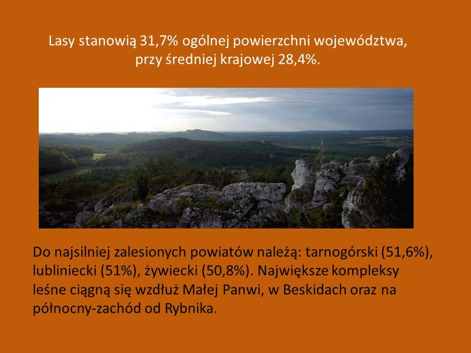 Lasy stanowią 31,7% ogólnej powierzchni województwa,