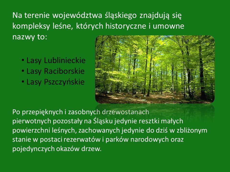 Na terenie województwa śląskiego znajdują się kompleksy leśne, których historyczne i umowne nazwy to: