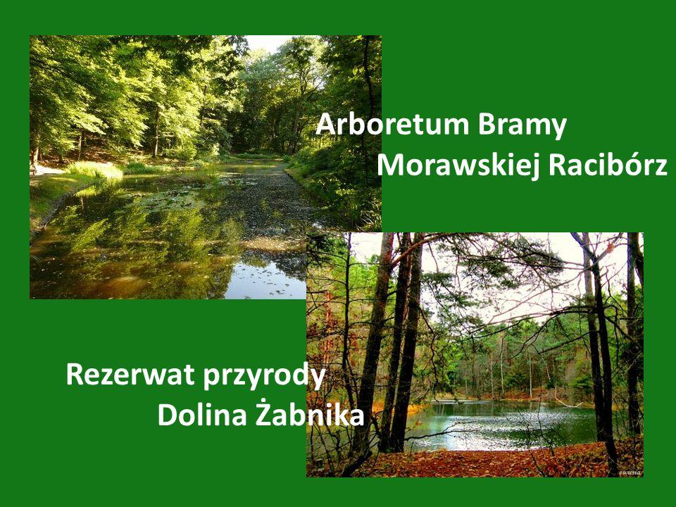 Arboretum Bramy Morawskiej Racibórz Rezerwat przyrody Dolina Żabnika