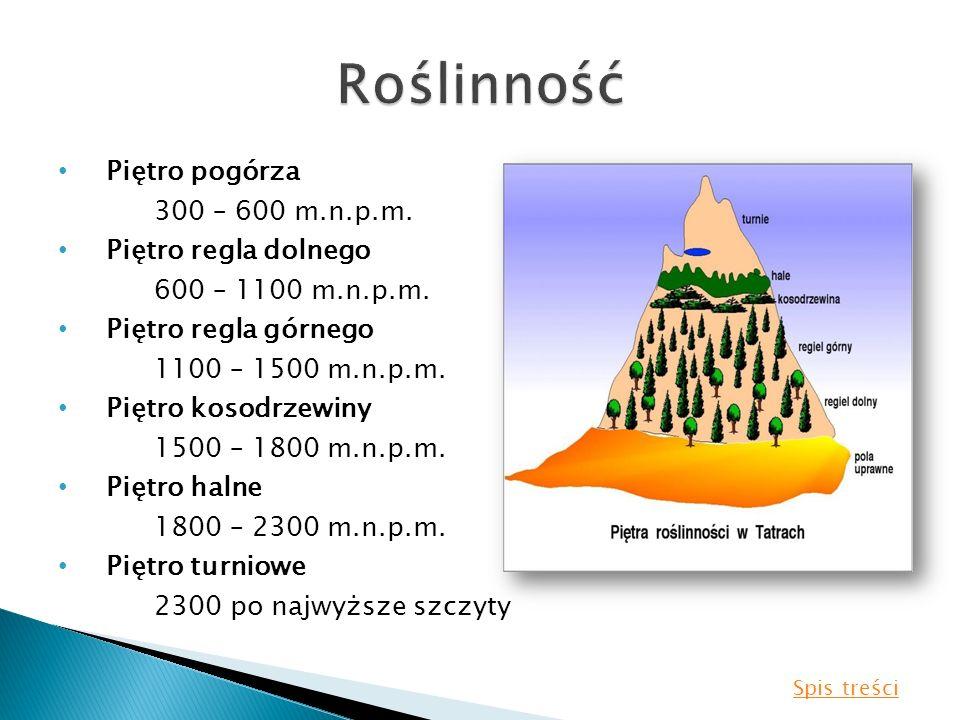 Roślinność Piętro pogórza 300 – 600 m.n.p.m. Piętro regla dolnego