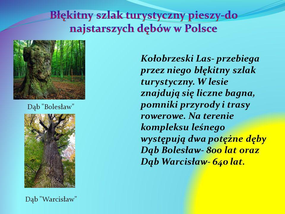 Błękitny szlak turystyczny pieszy-do najstarszych dębów w Polsce