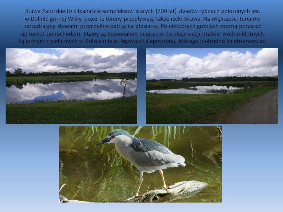 Stawy Zatorskie to kilkanaście kompleksów starych (700 lat) stawów rybnych położonych jest w Dolinie górnej Wisły, przez te tereny przepływają także rzeki Skawa.