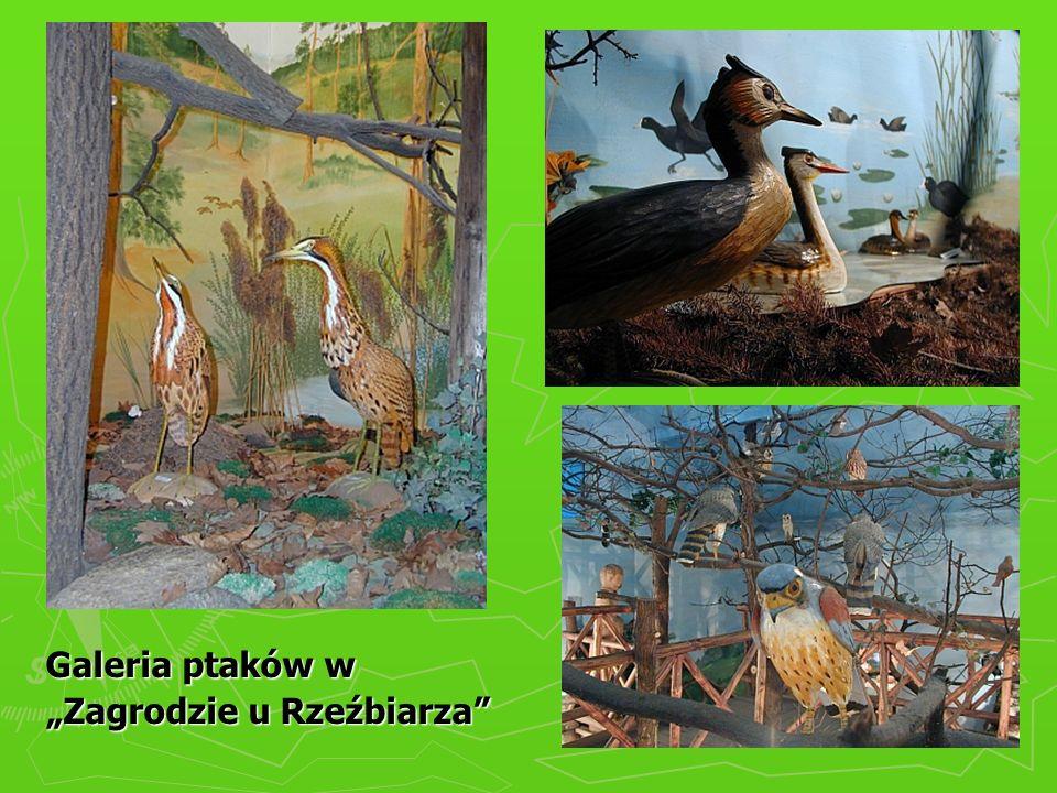"""Galeria ptaków w """"Zagrodzie u Rzeźbiarza"""