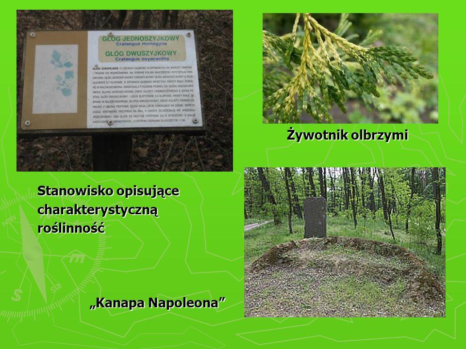 """Żywotnik olbrzymi Stanowisko opisujące charakterystyczną roślinność """"Kanapa Napoleona"""