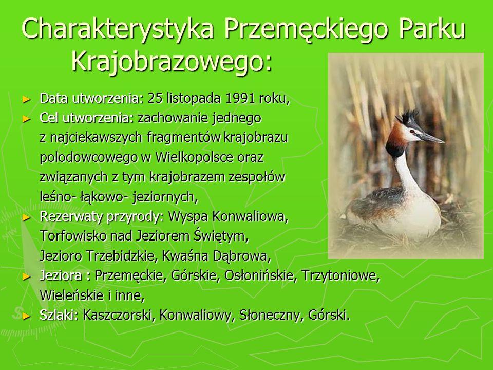 Charakterystyka Przemęckiego Parku Krajobrazowego: