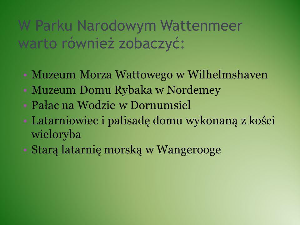 W Parku Narodowym Wattenmeer warto również zobaczyć: