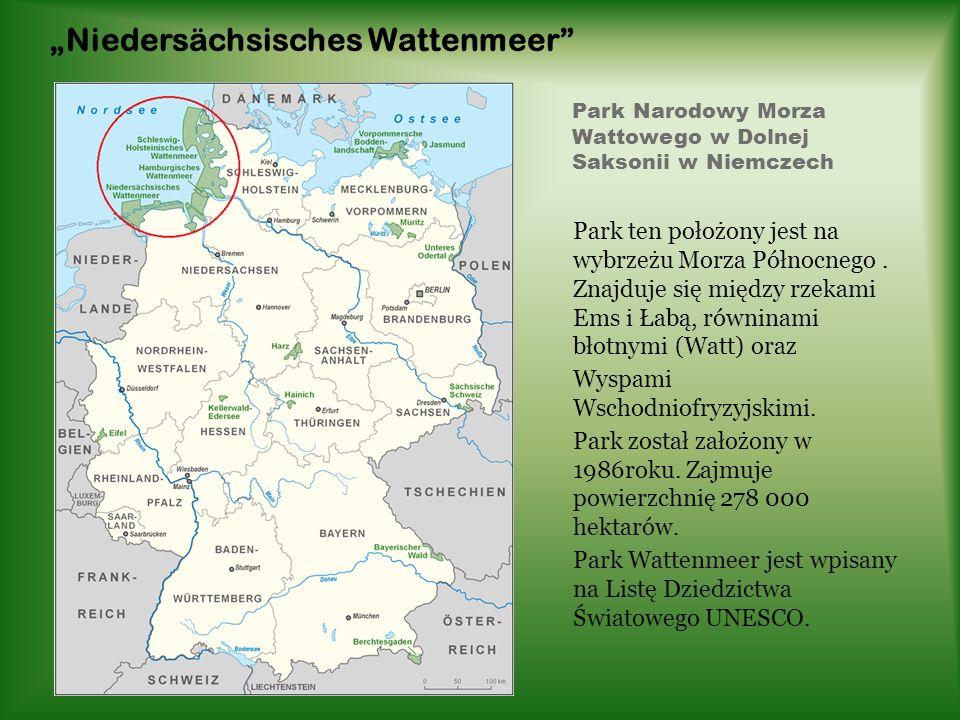 Park Narodowy Morza Wattowego w Dolnej Saksonii w Niemczech