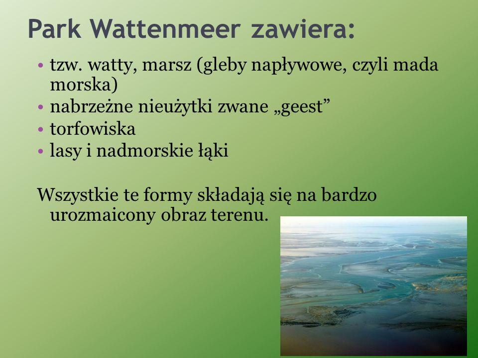 Park Wattenmeer zawiera: