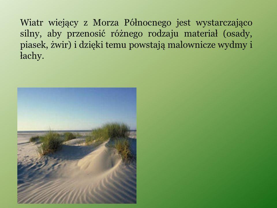 Wiatr wiejący z Morza Północnego jest wystarczająco silny, aby przenosić różnego rodzaju materiał (osady, piasek, żwir) i dzięki temu powstają malownicze wydmy i łachy.