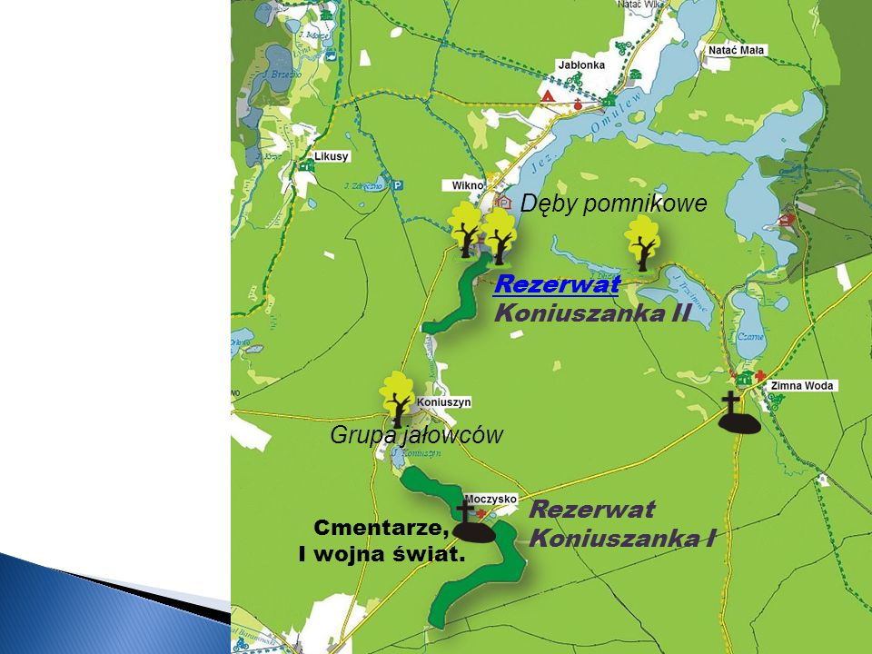 Dęby pomnikowe Rezerwat Koniuszanka II Grupa jałowców Rezerwat