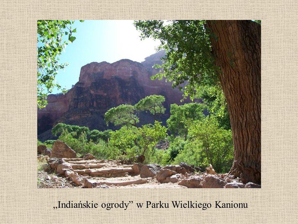 """""""Indiańskie ogrody w Parku Wielkiego Kanionu"""