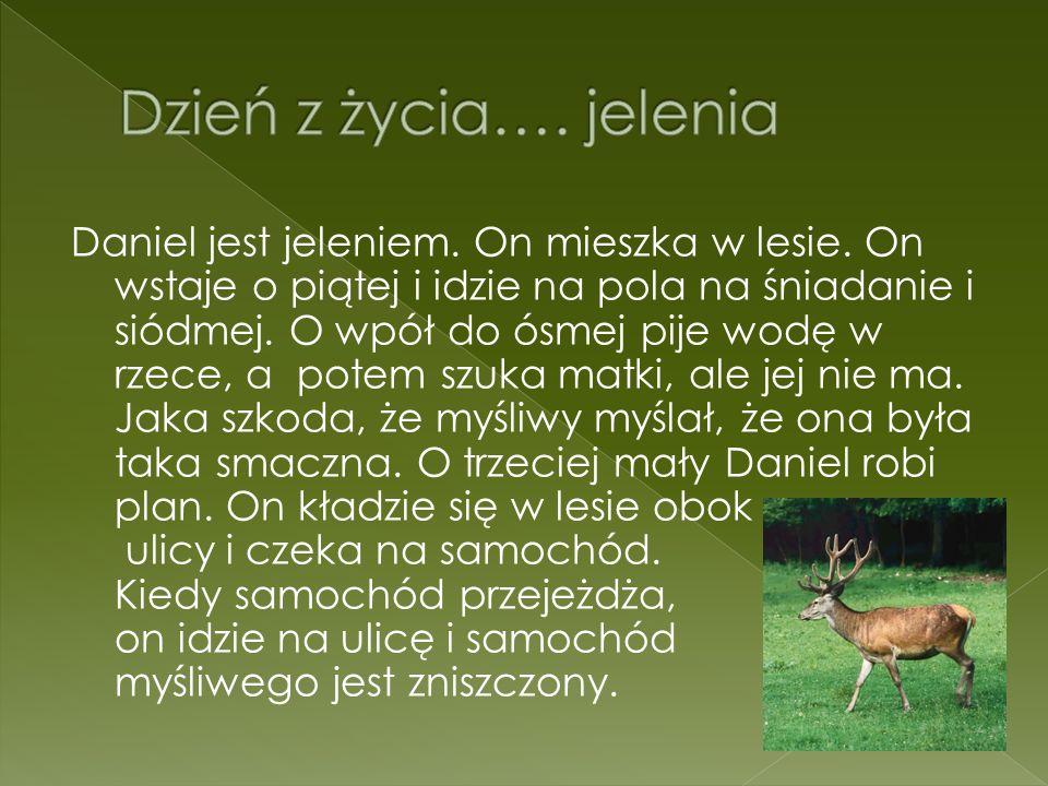 Dzień z życia…. jelenia