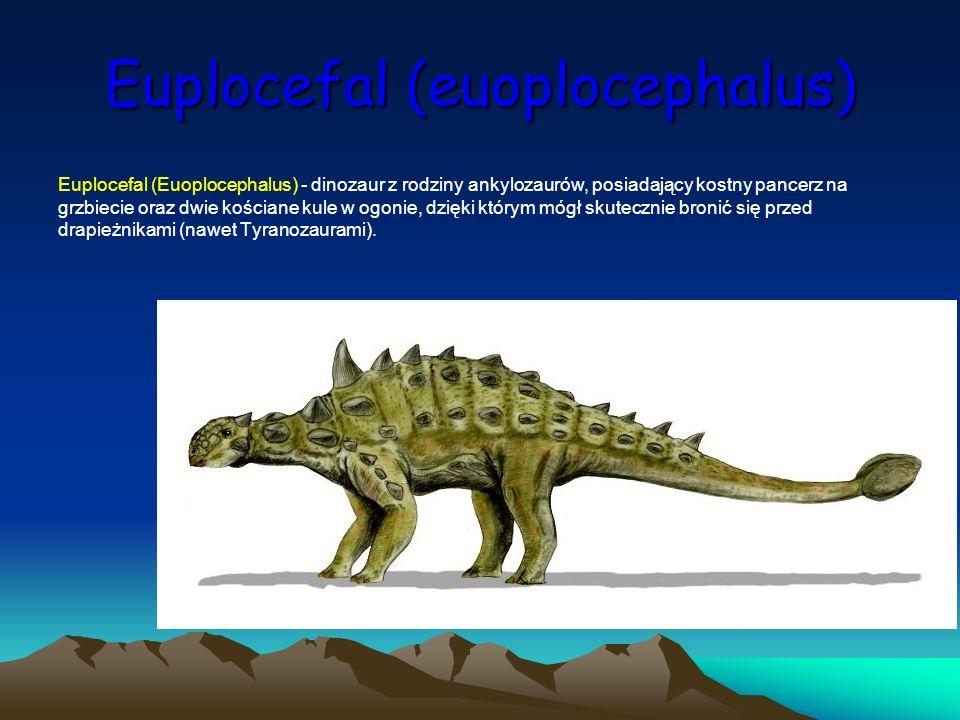 Euplocefal (euoplocephalus)