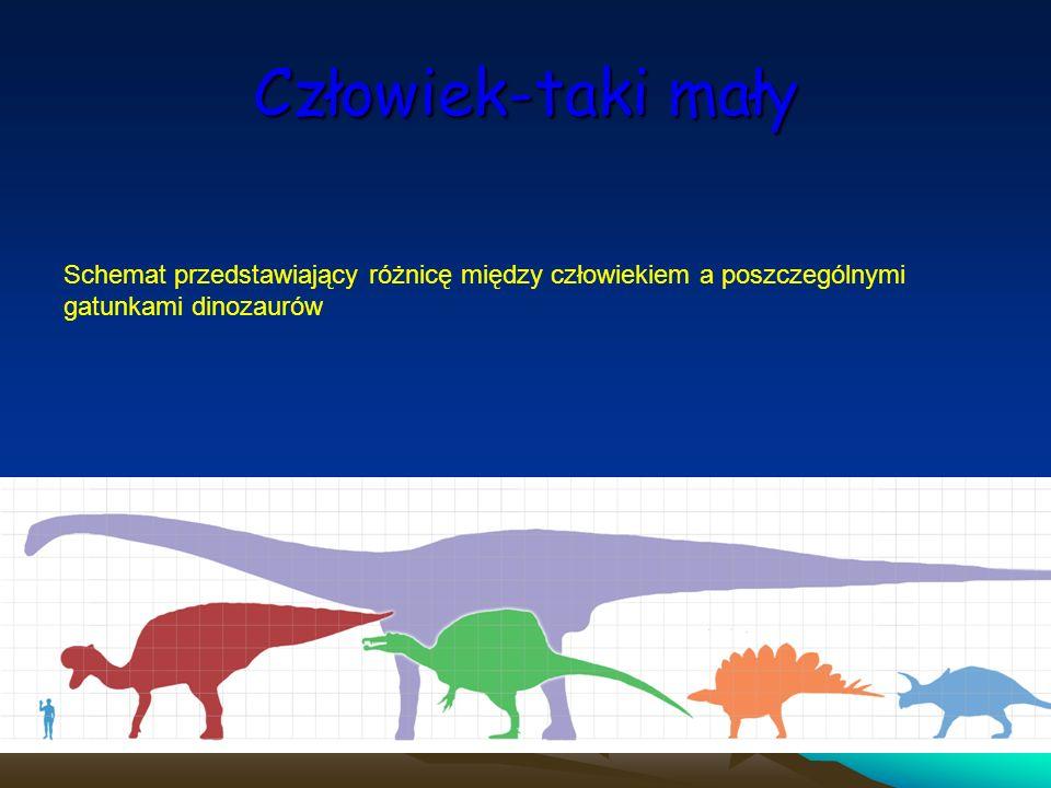 Człowiek-taki mały Schemat przedstawiający różnicę między człowiekiem a poszczególnymi gatunkami dinozaurów.