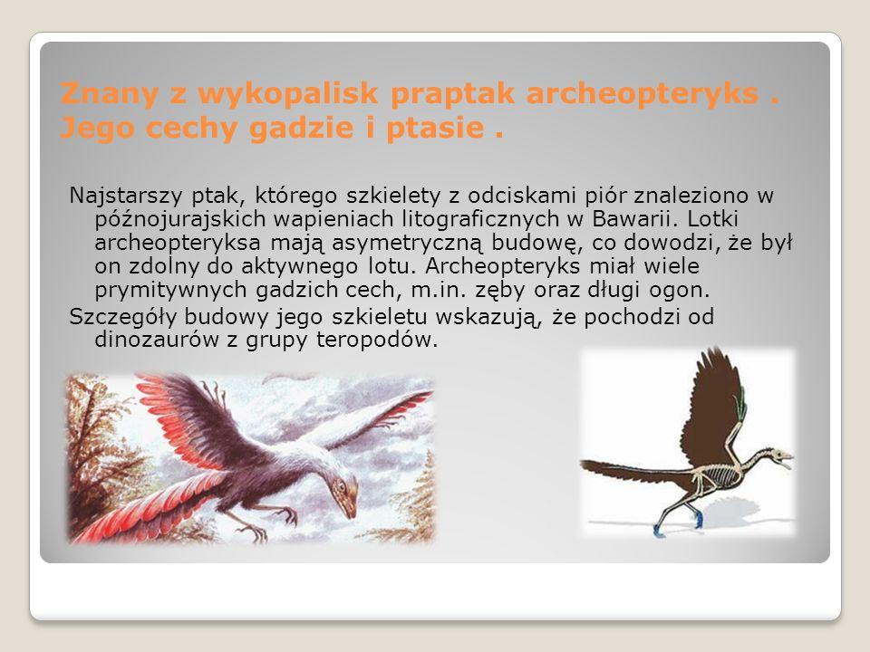 Znany z wykopalisk praptak archeopteryks . Jego cechy gadzie i ptasie .