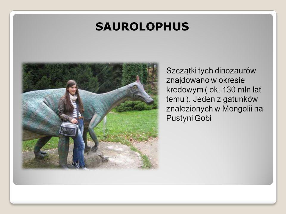 SAUROLOPHUS Szczątki tych dinozaurów znajdowano w okresie kredowym ( ok.